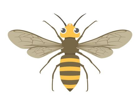 Illustration of a wasp