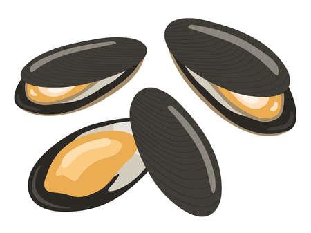 Mussel Illustrations