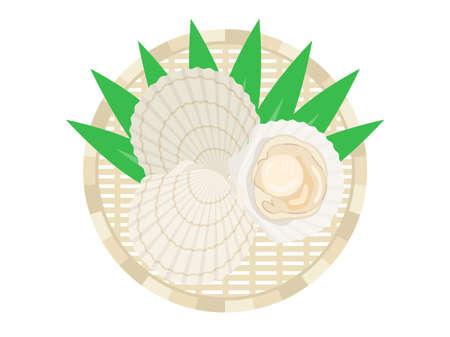Illustration of scallops