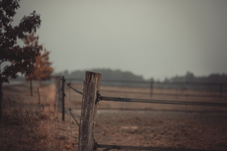 Autumn view of a pasture fence of empty willow. You can see individual wicker posts and the green fence Stockfoto