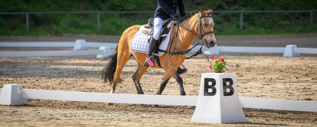Horse in the dressage arena at a horse show