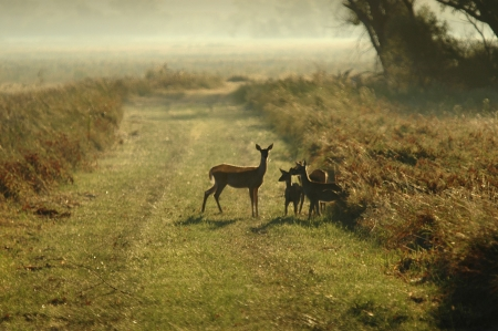 Family of white tail deer in soft early morning light. Stock Photo
