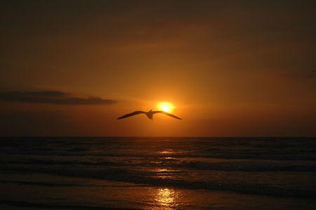 A sea gull flys across the horizon during a golden beach sunrise.