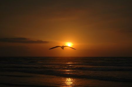 A sea gull flys across the horizon during a golden beach sunrise.