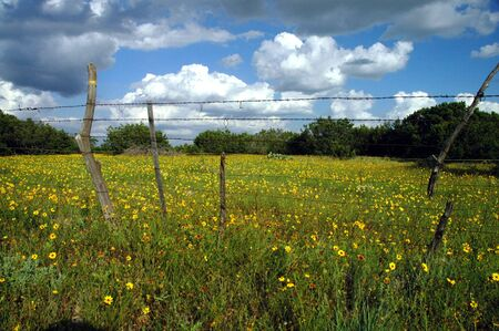 A meadow filled with wildflowers separated by an old barbed wire fence. Stock Photo
