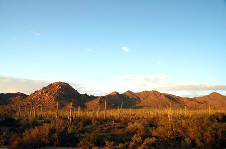 A view of the Sonora Desert from Saguaro National Park in southern Arizona.