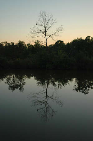 A tree is mirrored in the calm waters of a small pond at sunset. Stock Photo