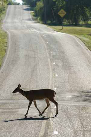 A silhouette of a female white-tailed deer crossing a hilly street.