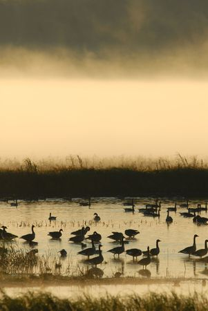 A heavy layer of fog raises off the water at a wetland wildlife refuge.