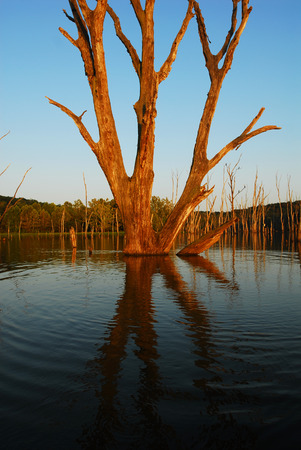 A sunset view on a lake with a dead tree standing tall above the water line.