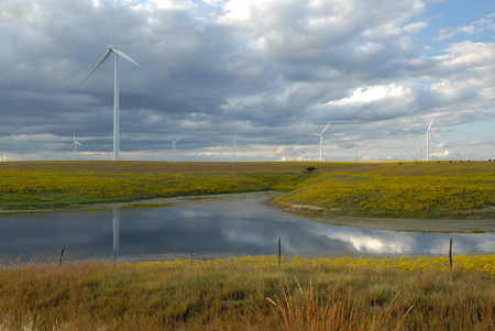 cattle grid: A large wind farm over looking a grazing pasture and a watering pond.