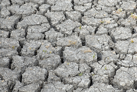 A patch of dried earth that has been scorched by the sun during a time of drought.