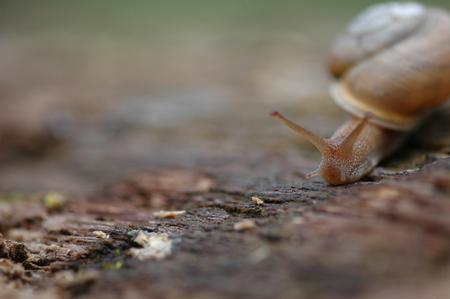 매우 좁은 피사계 심도를 사용 하여 갈색 정원 달팽이의 이미지를 닫습니다.