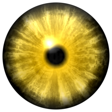 Yellow animal eye with small pupil and black retina in background. Dark colorful iris around pupil, detail view into eye bulb.