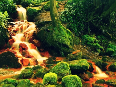 sediments: Cascades in rapid stream of mineral water. Red ferric sediments on big boulders between green ferns. Stock Photo