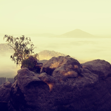 wisps: Small nature bonsai above deep misty valley full of morning heavy wisps of blue orange fog. Sandstone peaks increased from mist, dark hills and hot yellow Sun on horizon.