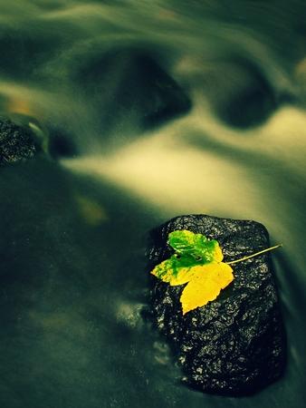 castaway: Autumn colorful leaf. Castaway on wet slipper stone in stream