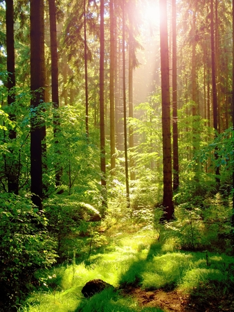 Spring sunset in green forest