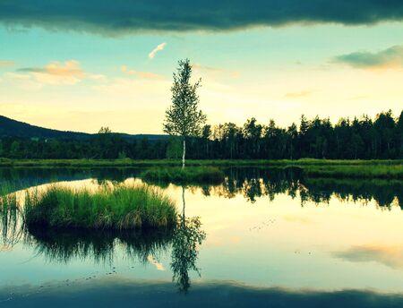 Moerassige meer met spiegel waterniveau in geheimzinnig bos, jonge boom op het eiland in het midden. Frisse groene kleur van kruiden en gras.