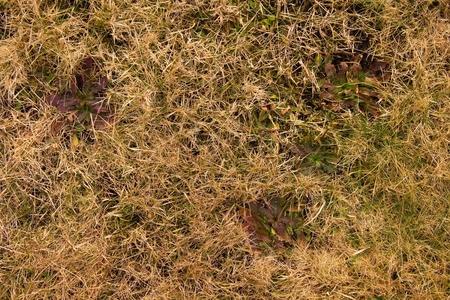 putrefy: Decay harvested grass in big green smell mound in corner of garden.  Organic fertilizer.
