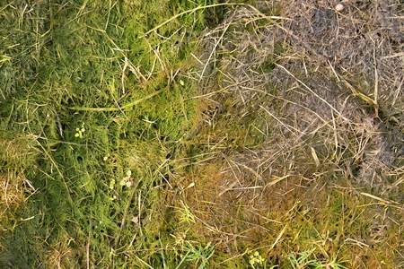 whiff: Decay harvested grass in big green smell mound in corner of garden.  Organic fertilizer.