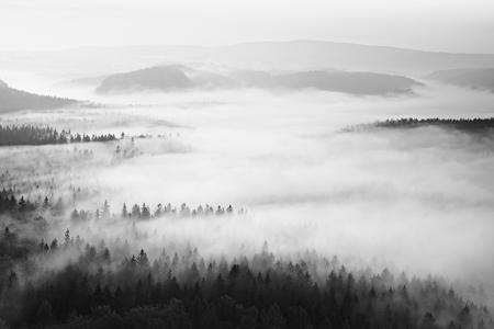 arboles blanco y negro: La salida del sol de otoño en una hermosa montaña dentro de la inversión. Los picos de los cerros aumentaron de fondo brumoso.