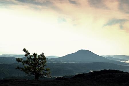 valley below: Wild bonsai of small pine on sandstone rocks. Blue mist in valley below peak.