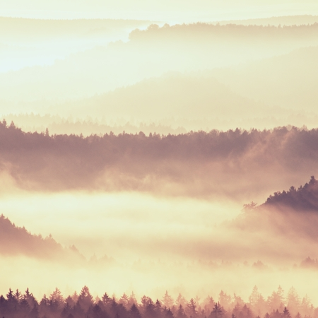 treetops: Autumn sunrise in a beautiful mountain of Bohemia. Treetops and peaks of hills increased from yellow and orange fog striped due to strong Sun rays. Stock Photo