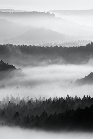 Sharp treetops. Autumn sunrise in a beautiful mountain within inversion. Peaks of hills increased from foggy background.