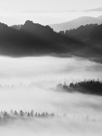 treetops: Sharp treetops. Autumn sunrise in a beautiful mountain Within inversion. Peaks of hills Increased from Foggy background.