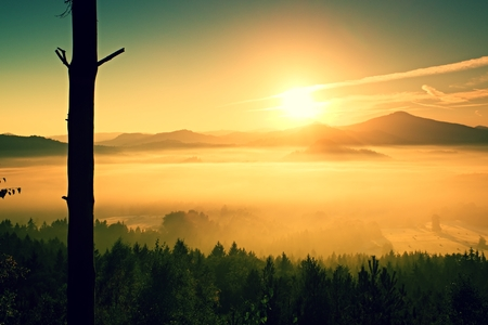 freeze dried: Orange foggy morning. Dried lonely tree on a mountain slope at misty day Stock Photo