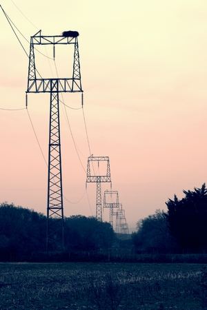 power within: Electric power poles with square frame in foggy countryside Within sunrise. Big stork nest on the construction.