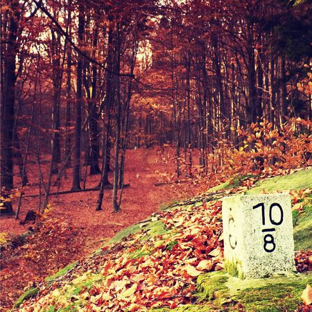 boundary: Boundary stone at germany czech border. Border area in deep beech forest. Stock Photo