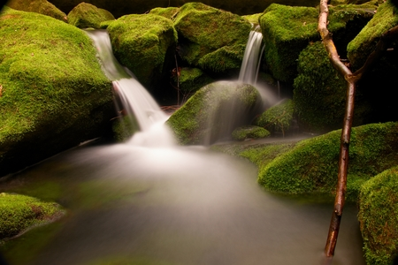 rocks water: Torrent,  mountain stream with stones, rocks and fallen tree.