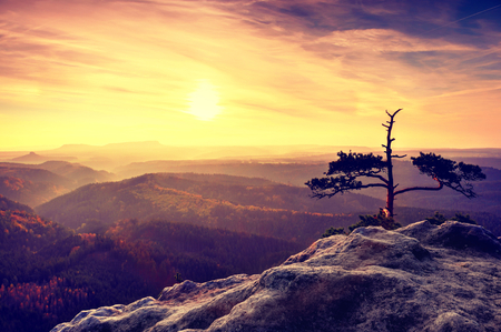 valley below: Wild bonsai of pine on sandstone rocks. Blue mist in valley below.