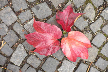cobbles: Cobblestone paving footpath with dry autumn leaves purple, granite cobbles in pavement Stock Photo