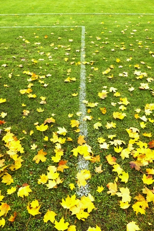 sports field: End of football season. Dry maple leaves fallen on ground of natural green football turf with painted white line.