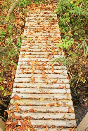 foot bridges: Natural Bridge created from birch trunks in a colorful autumn forest