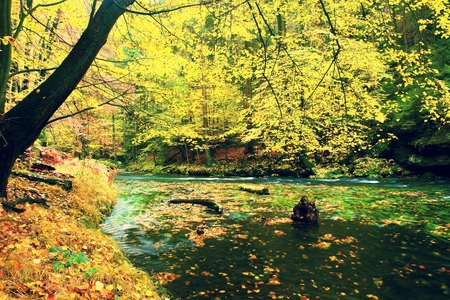 bended: Colors of autumn mountain river. Colorful gravel with leaves, leaves trees bended above river.