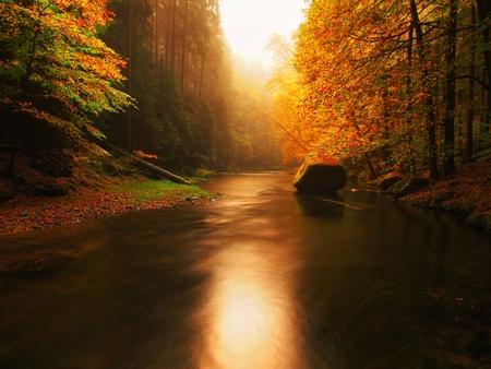 オレンジ色のブナで覆われて秋の山の川の石の銀行を残します。水の上の枝に新緑が反射を作る
