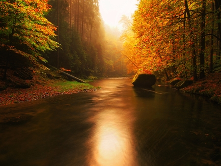 Stony bank of autumn mountain river covered by orange beech leaves. Fresh green leaves on branches above water make reflection