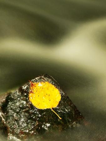 aspen leaf: Yellow aspen leaf on boulder in rapids Stock Photo