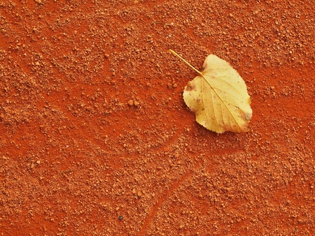 end of the trail: Fallen yellow dry leaf on red ground of tennis court