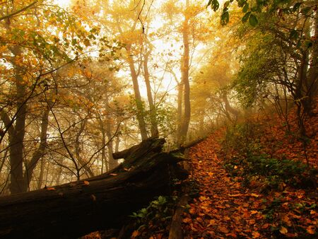 sombre: Wooden steps trunk in autumn forest, tourist footpath. Stock Photo