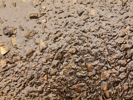 solidified: Wet ash of burnt grass solidified by rain into dark mud. Water hanged ash into a cover of clay.