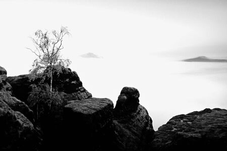 increased: Island with tree in misty ocean. Full moon night in  beautiful mountain. Sandstone peaks  increased from heavy creamy fog. Stock Photo