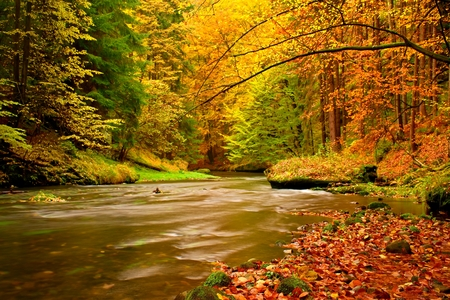 river banks: View into autumn mountain river with blurred waves ,, fresh green mossy stones and boulders on river banks covered with colorful leaves from maples, aspens Beeches or tree.
