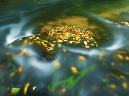 Colorful aspen leaves on boulder in mountain stream. Cold water blurred by long exposure, blue reflection in water level. Stock Photo