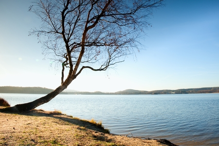 bended: Alone bended birch tree at sea beach, empty branche s without leaves. Sunny autumn day. Stock Photo