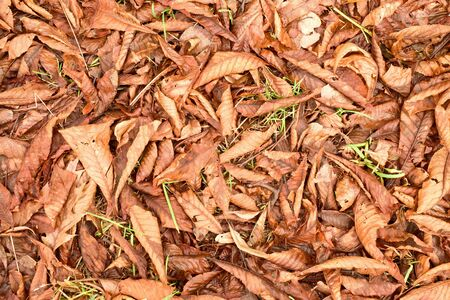 ground nuts: Autumn park ground with chestnut leaves, dark colorful leaves and nuts
